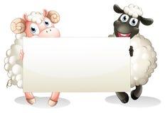Due pecore che tengono un'insegna vuota Fotografia Stock Libera da Diritti