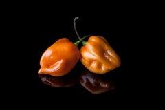 Due peperoni gialli del habanero Fotografia Stock
