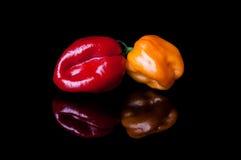 Due peperoni giallo e rosso del habanero Immagini Stock Libere da Diritti