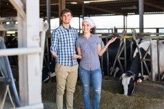 Due persone che applaudono le mucche in capannone e nel sorridere Fotografie Stock Libere da Diritti