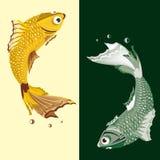 Due pesci d'acqua dolce Immagini Stock