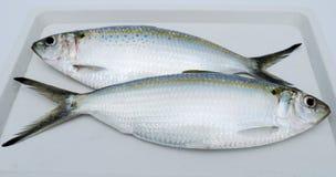 Due pesci freschi Fotografie Stock