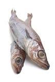 Due pesci grezzi Fotografie Stock Libere da Diritti