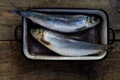 Due pesci grezzi Ricetta sana dell'alimento Immagini Stock