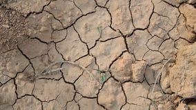 Due piante verdi si sviluppano quando il suolo è asciutto ed incrinato immagine stock