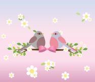 Due piccioni adorabili su un ramo di albero Fotografia Stock Libera da Diritti