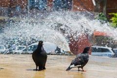 Due piccioni che rinfrescano nella fontana Fotografie Stock Libere da Diritti