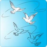 Due piccioni durante il volo Fotografia Stock