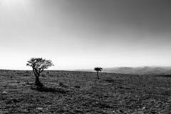 Due piccole piante su una montagna, con la forte luce del sole, sotto la a Fotografie Stock Libere da Diritti