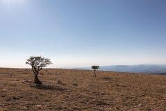 Due piccole piante su una montagna, con la forte luce del sole, sotto la a Fotografia Stock Libera da Diritti