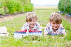 Due piccoli amici, ragazzi del bambino che si divertono sul lampone coltivano Immagini Stock Libere da Diritti
