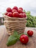 Due piccoli canestri di vimini impilati con una manciata di tomat di pachino Fotografie Stock Libere da Diritti
