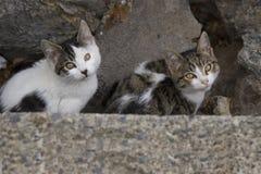 Due piccoli gatti Fotografia Stock Libera da Diritti