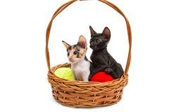 Due piccoli gattini in un canestro Immagine Stock
