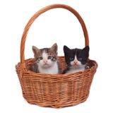 Due piccoli gattini in un canestro di vimini  Fotografie Stock Libere da Diritti