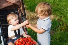 Due piccoli ragazzi del fratello germano sull'azienda agricola della fragola. Fotografia Stock
