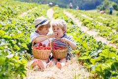 Due piccoli ragazzi del fratello germano sulla fragola coltivano di estate Fotografia Stock