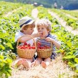 Due piccoli ragazzi del fratello germano sulla fragola coltivano di estate Fotografia Stock Libera da Diritti