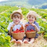 Due piccoli ragazzi del fratello germano sulla fragola coltivano di estate Immagine Stock