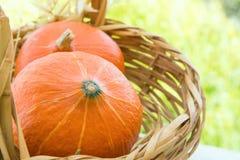 Due piccolo Heilroom arancio luminoso Kuri Pumpkins rossa in canestro di vimini Autumn Plants asciutto in giardino Caduta in anti fotografie stock libere da diritti