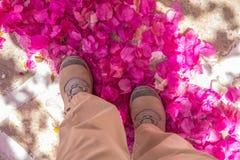Due piedi che stanno nel mucchio porpora luminoso dei petali della buganvillea Immagini Stock Libere da Diritti