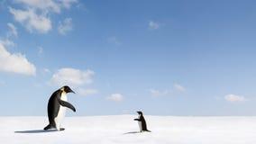 Due pinguini dell'imperatore su neve Immagine Stock Libera da Diritti