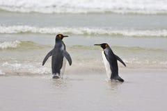 Due pinguini di re Fotografia Stock Libera da Diritti