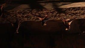 Due pipistrelli che appendono su una parete archivi video