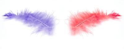 Due piume Fotografia Stock Libera da Diritti