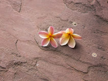 Due plumerie sul pavimento della pietra della sabbia Fotografia Stock