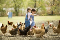 Due polli d'alimentazione della bambina Immagini Stock Libere da Diritti