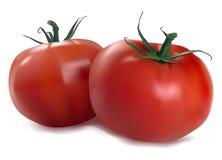 Due pomodori rossi Fotografia Stock Libera da Diritti