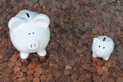 Due porcellini salvadanaio sul cercare dei penny Fotografia Stock