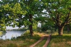 Due querce e una strada non asfaltata sulla sponda del fiume Fotografia Stock Libera da Diritti