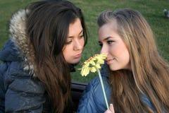 Due ragazze felici che si siedono sul banco Fotografie Stock Libere da Diritti