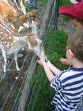 Due ragazzi alimentano un animale Immagini Stock Libere da Diritti