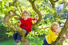 Due ragazzi attivi del bambino che godono della scalata sull'albero immagini stock libere da diritti