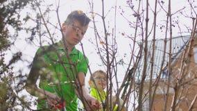 Due ragazzi hanno tagliato il cespuglio con un pruner e le forbici di giardinaggio archivi video