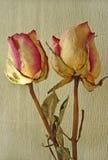 Due Rosa Fotografie Stock Libere da Diritti