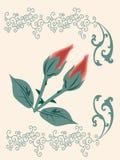 Due rose Immagine Stock