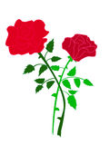 Due rose isolate Immagini Stock