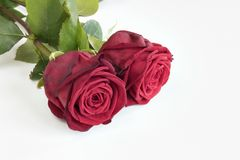 Due rose rosse fotografia stock