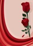 Due rose rosse Immagini Stock Libere da Diritti