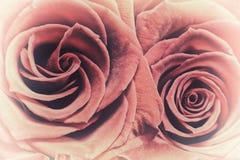 Due rose rosse - alto vicino Fotografia Stock Libera da Diritti