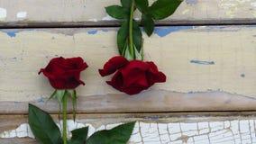 Due rose rosse sul fondo rustico di legno di stile Vecchia struttura di legno con la pelatura della pittura blu e bianca fotografia stock