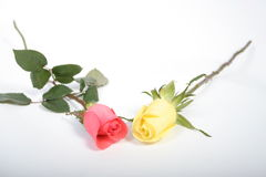 Due roses01 Immagine Stock Libera da Diritti