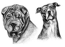 Due schizzi del carbone e della matita, Sharpei e cane di Staffordshire dell'americano Fotografia Stock Libera da Diritti