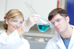 Due scienziati seri che esaminano un liquido blu Immagini Stock