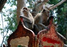 Due scimmie Immagini Stock Libere da Diritti