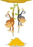 Due scimmie Fotografie Stock